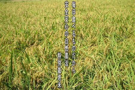 自然農法 特別栽培米コシヒカリ「自然の恵み」