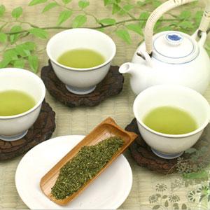 給茶機用のお茶