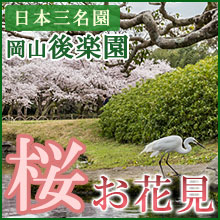 後楽園桜2016