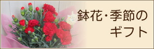 鉢花・季節のギフト