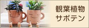 観葉植物・サボテン