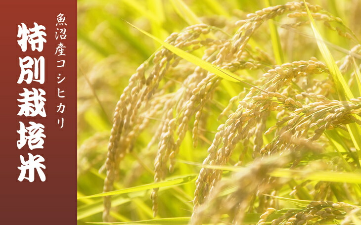 魚沼産コシヒカリ特別栽培米