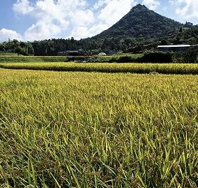 新潟魚沼産、最高級のもち米「こがねもち」を100%使用。