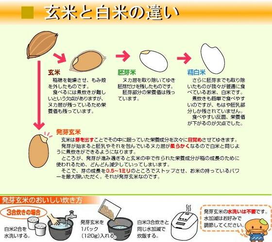 発芽玄米と白米の違い