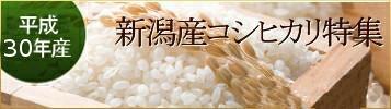 新潟産コシヒカリ特集