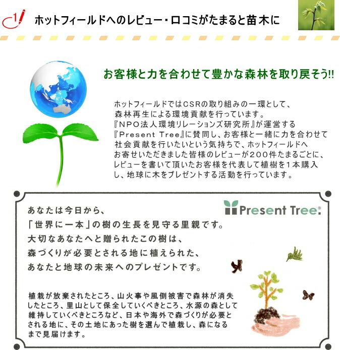 ホットフィールドでは、森林再生による環境貢献を行っています。