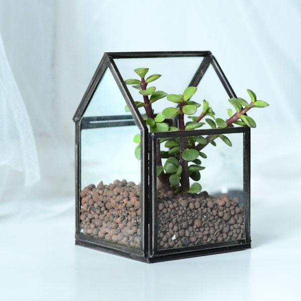 小さな家で植物を愛でる。ハウステラリウム