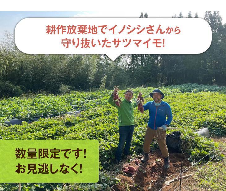 情熱大陸 耕作放棄地再生プロジェクト
