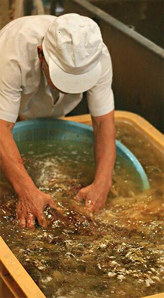 テングサを洗う