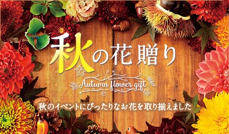 秋の花贈り特集