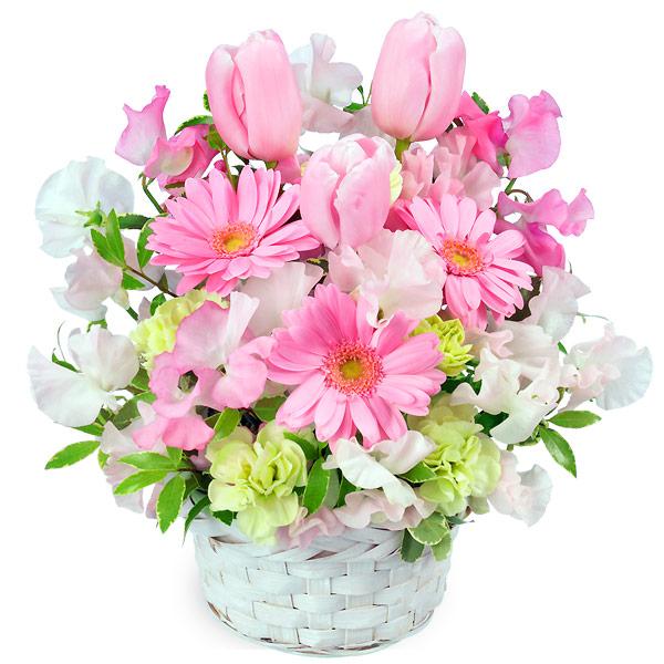 【チューリップ特集】春のピンクアレンジメント(ピンク) 511271 |花キューピットの2020チューリップ特集特集
