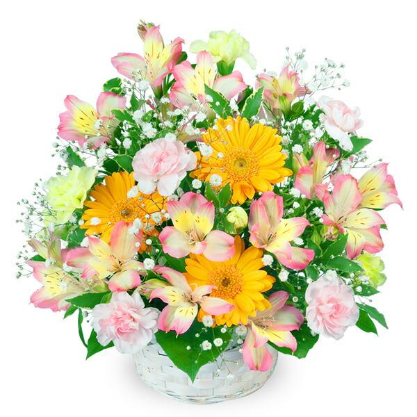 【春の誕生日】アルストロメリアのアレンジメント 511275 |花キューピットの2020春の誕生日特集
