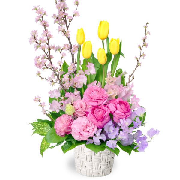 【チューリップ特集】チューリップと桜のアレンジメント 511694 |花キューピットの2020チューリップ特集特集