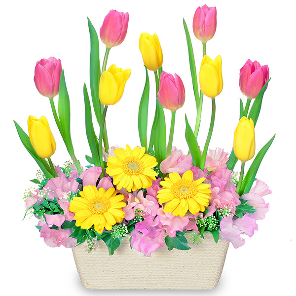 【チューリップ特集】チューリップのガーデンアレンジメント 511742 |花キューピットの2020チューリップ特集特集