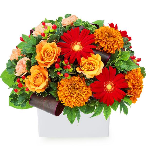 【秋の結婚記念日】オレンジバラと赤ガーベラのアレンジメント 512038 |花キューピットの2019秋のお祝いプレゼント特集