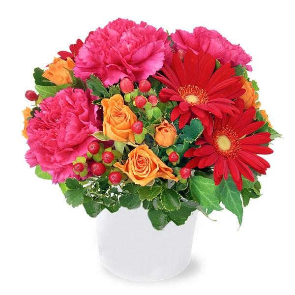 【秋の結婚記念日】赤ガーベラの鮮やかアレンジメント 512040 |花キューピットの2019秋のお祝いプレゼント特集