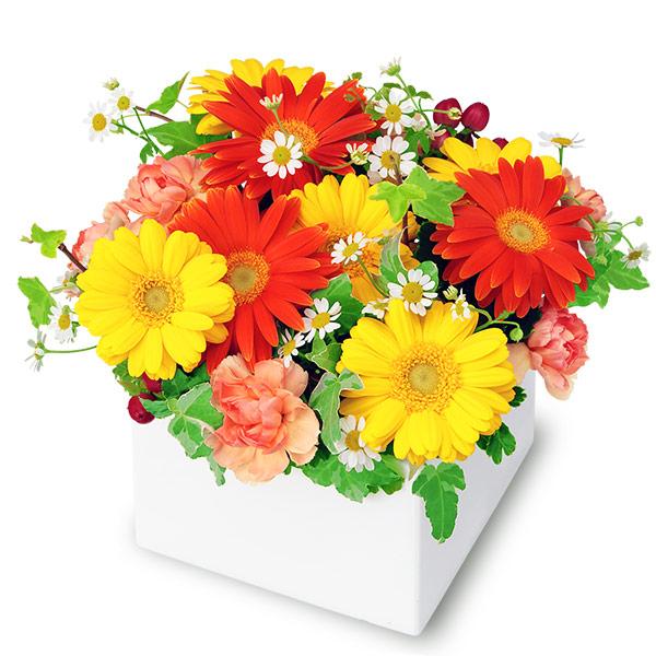 【秋の結婚記念日】2色ガーベラのキューブアレンジメント 512059 |花キューピットの2019秋のお祝いプレゼント特集