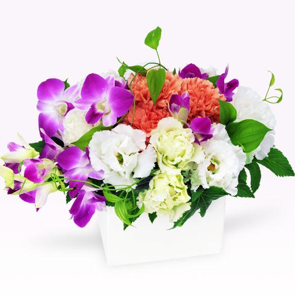 【秋の誕生日】デンファレのキューブアレンジメント 512095  花キューピットの秋のお祝いプレゼント特集2019