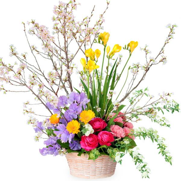 【ひな祭り】桜の豪華なアレンジメント 512163 |花キューピットの2020ひな祭り特集