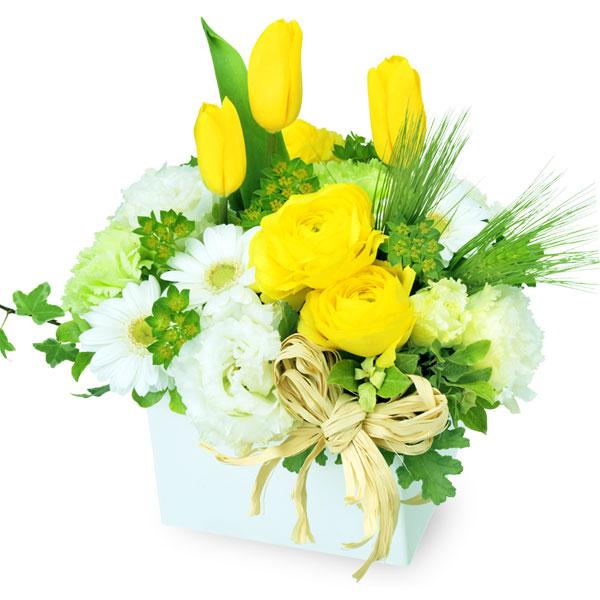 【チューリップ特集】イエローとホワイトのキューブアレンジメント 512166 |花キューピットの2020チューリップ特集特集