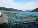 海水養殖場