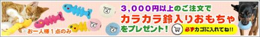 5000円以上でプレゼント