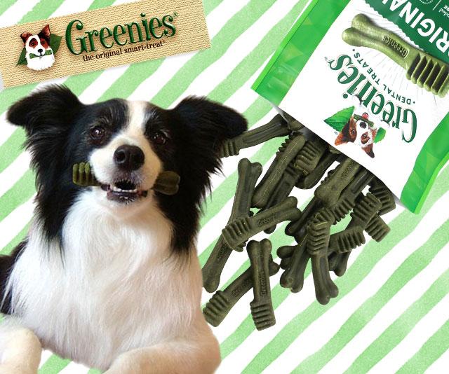 【楽天市場】犬 おやつ ドッグトリーツ> 犬用おやつ メーカーで探す> Greenies グリニーズ:犬の服のiDog