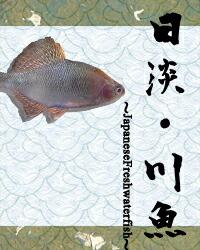日淡・川魚