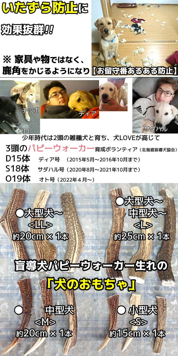 5店長は犬バカすぎてボランティアとして北海道盲導犬協会の元パピーウォーカーです2015年〜2016年10月まで