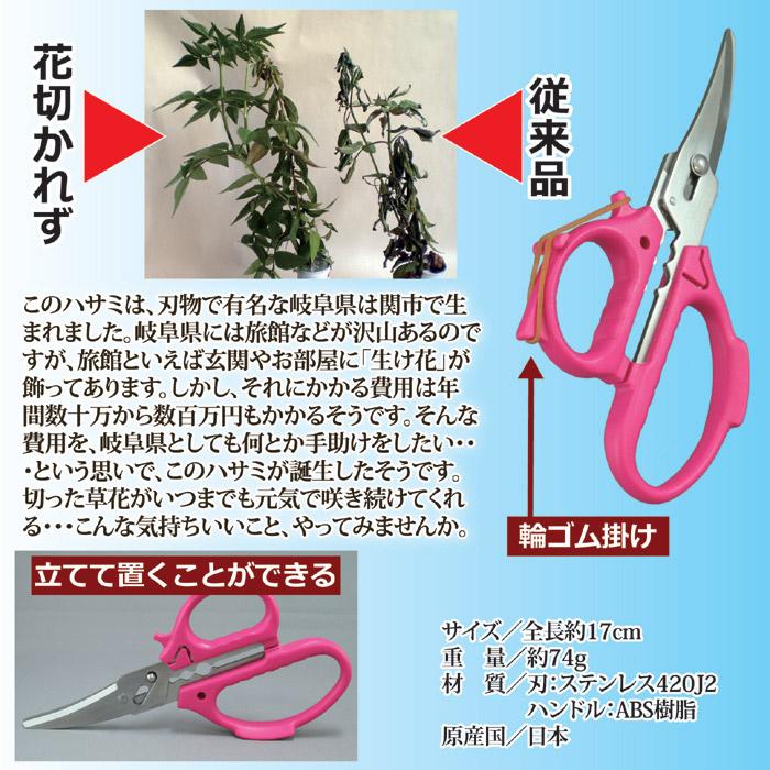 このハサミは、刃物で有名な岐阜県は関市で生まれました。岐阜県には旅館などが沢山あるのですが、旅館といえば玄関やお部屋に「生け花」が飾ってあります。しかし、それにかかる費用は年間数十万から数百万円もかかるそうです。そんな費用を、岐阜県としても何とか手助けをしたい・・・という思いで、このハサミが誕生したそうです。切った草花がいつまでも元気で咲き続けてくれる・・・こんな気持ちいいこと、やってみませんか。輪ゴム掛け付き。立てて置くこともできる。花切専用ハサミ「花切かれず」。