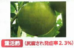 葉活酢(ようかつす)のトマトでの使用事例