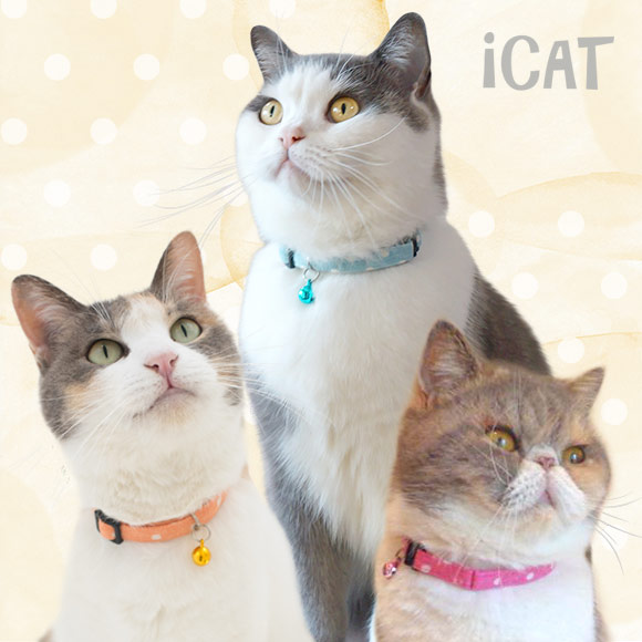 猫 首輪 安全 iCat アイキャット カジュアルカラー キャンディードット 猫の首輪 猫首輪 安全首輪