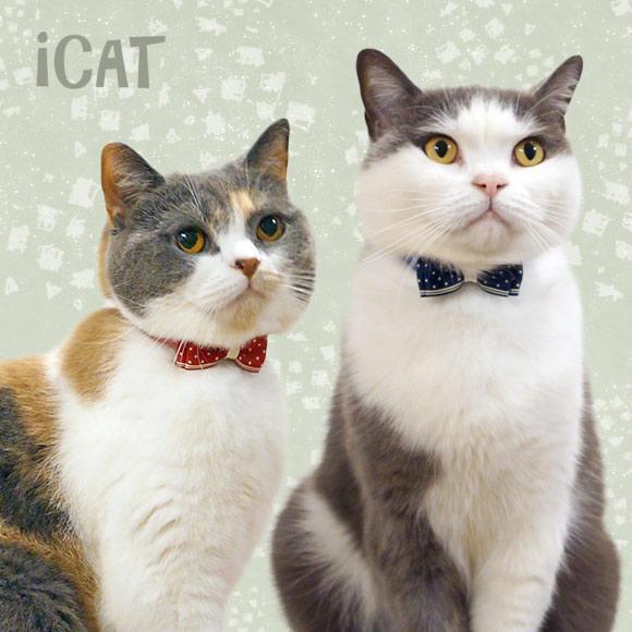 猫 首輪 iCat アイキャット ラブリーカラー デニムドット×スターリボン 猫の首輪 猫首輪 安全首輪