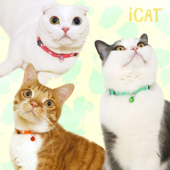猫 首輪 iCat アイキャット カジュアルカラー 大きな水玉 猫の首輪 猫首輪 安全首輪