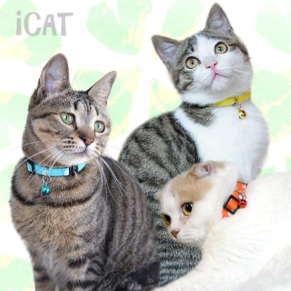 子猫 首輪 iCat アイキャット キティカラー 大きな水玉 猫の首輪 猫首輪 安全首輪
