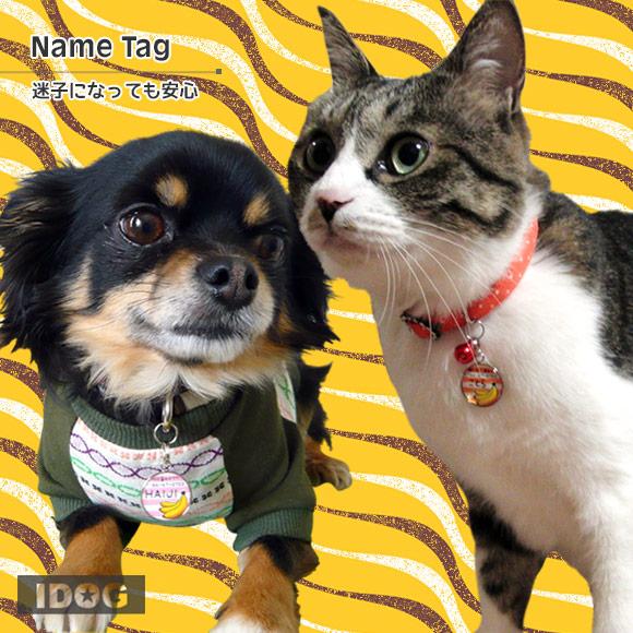 犬 猫 ペット 迷子札 iDog&iCat オリジナルネームタグ 迷子札 バナナボーダー ネームプレート 名札 ドッグタグ