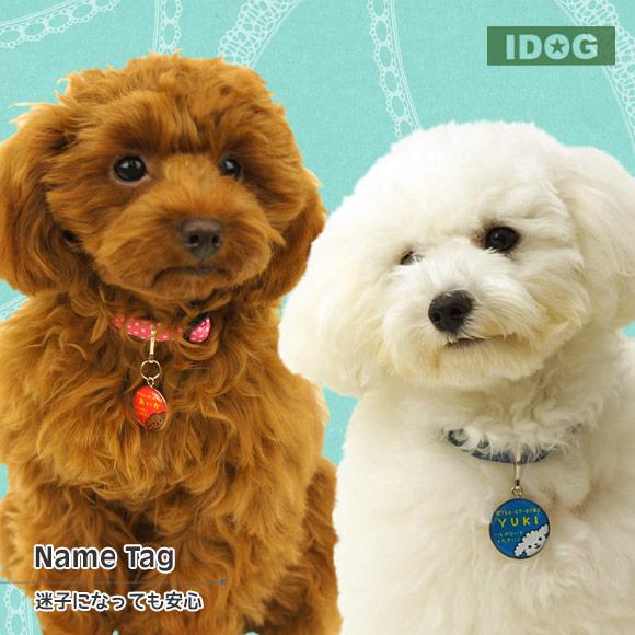 犬 首輪 ネーム入り 迷子札 iDog&iCatオリジナル ネームタグ 迷子札プードル ネームプレート 名札 ドッグタグ