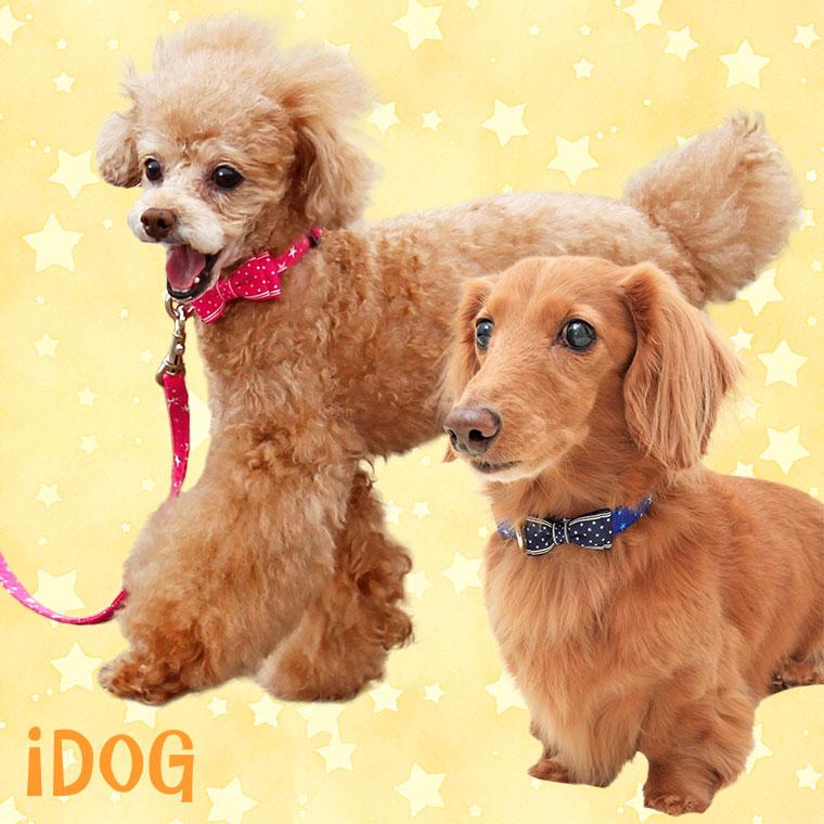 犬 首輪 リード リード・カラーセット ランダムスター×スターリボン 犬の首輪  犬のリード