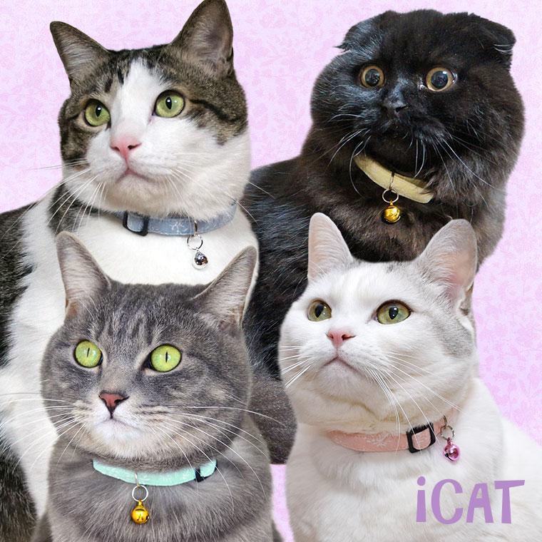 猫 首輪 iCat カジュアルカラー 小花フラワー 猫の首輪 猫首輪 安全首輪