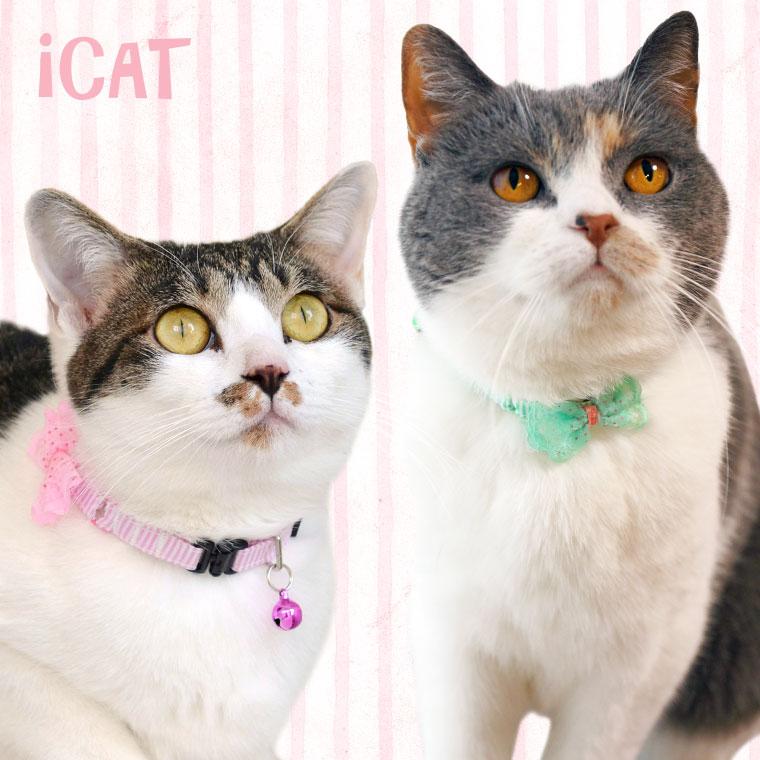 猫 首輪 iCat キティカラー ピンボーダー×レースリボン 猫の首輪 猫首輪 安全首輪