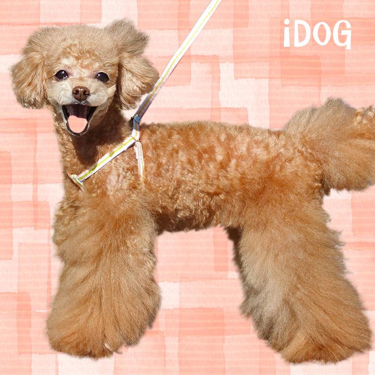 犬 ハーネス iDog ワンタッチハーネス カラフルストライプ 犬のハーネス