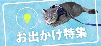 お出かけ特集|猫の首輪のiCat