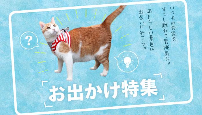 お出かけ特集 猫の首輪のiCat