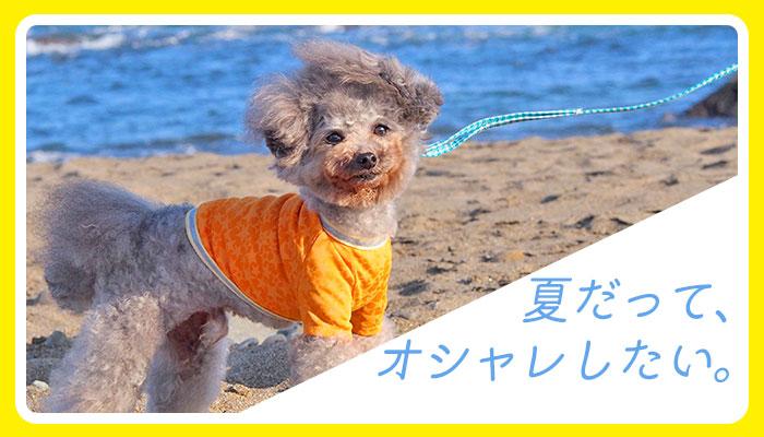 夏だって、オシャレしたい。|犬の服のiDog&iCat