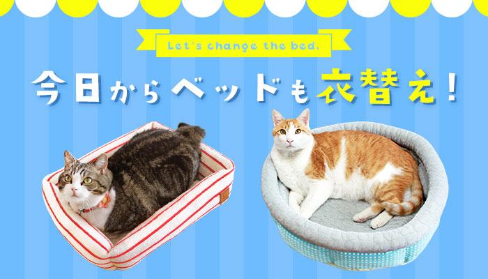 ベッド特集|猫の首輪のiCat