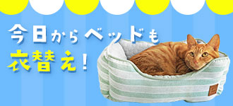 今日からベッドも衣替え|猫の首輪のiCat