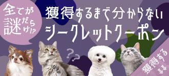 【楽天市場】キャンペーン> シークレットクーポン:iCat【猫首輪&猫グッズ】