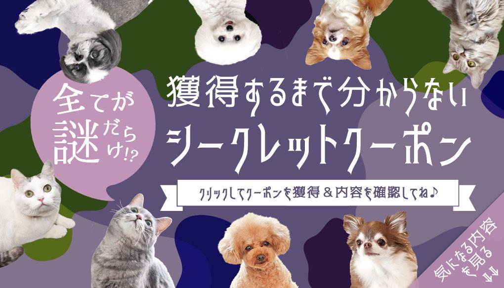【楽天市場】シークレットクーポン