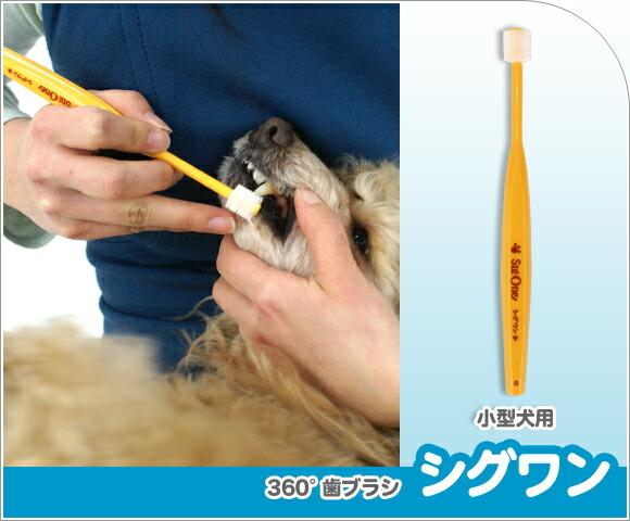 犬 歯石 歯ブラシ シグワン 360度歯ブラシ 小型犬用 イエロー 歯ブラシ 歯磨き はみがき ハミガキ