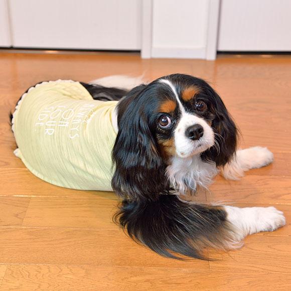 【犬服 タンク】 iDog アイドッグ 編みレースタンク【春物】【夏物】[犬の服のiDog]